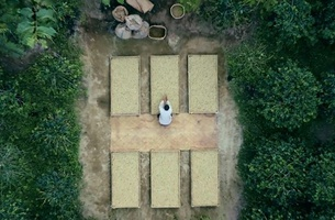 Nespresso Explores 'Master Origins' in New Campaign from JWT London