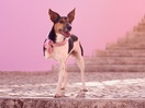 Three-Legged Dog Highlights How Animal-Friendly These Sweets Are