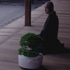 Has This Bonsai Tree Achieved Artificial Intelligence?
