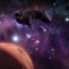 SHEBA's Sleep Inducing Ad Helps Cat Parents Get Back to Sleep
