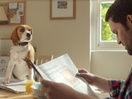 Talking Dog Has a Lot to Say in VCCP's New Beagle Street Spot