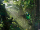Framestore Pictures' Murray Butler Directs Nature for Fully-CG Purdey's Ad