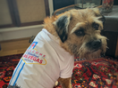 More Than a T-Shirt: Notes from Creative LIAisons 2019