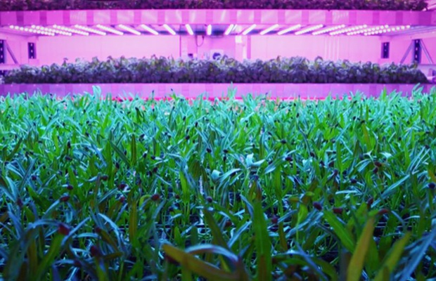 BT and Wunderman Thompson Focus on Agritech Innovators in New Instalment of 'The Future is Now'