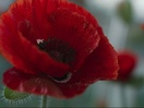 The Royal British Legion Rethinks Remembrance with Stunning CGI Poppy Advert