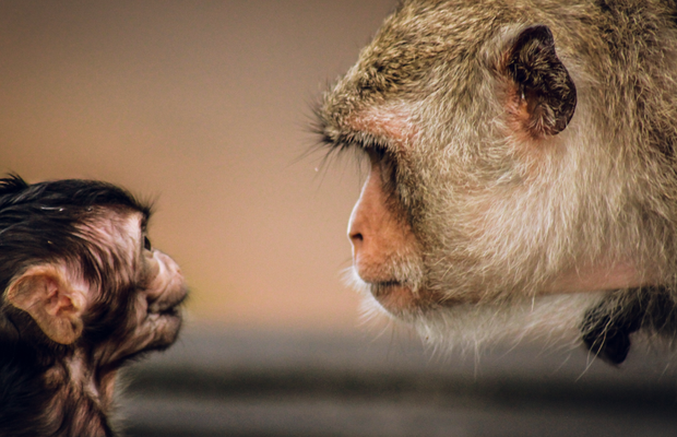 Animals are Now Formally Recognised as Sentient Beings - Here's How NOT to Make Ads Speciesist