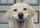 adam&eve DDB is Saving Dogs From British Teeth in GREENIES Campaign