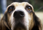 Direct Line Unleashes the Hound for new Pet Fix Campaign