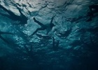 Jungle Studios Compose High-impact Sound for RNLI to Raise Awareness of Deep Water Survival