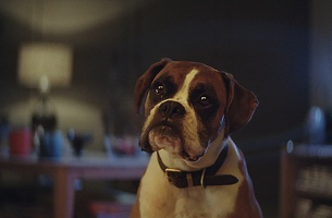 Introducing Buster the Boxer, Star of John Lewis' 2016 Christmas Ad