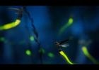STEVE COPE | Range Rover 'Fireflies'