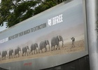 WCRS and Born Free Highlights African Elephant Crises with Striking Campaign