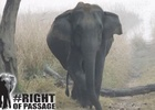 World Land Trust Campaign Seeks a #RightOfPassage to Save Indian Elephants