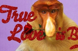 ugly animals search for love in droga5s valentines day cards - Valentines Animals