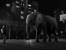 WWF Poignantly Captures the Importance of Home This Christmas