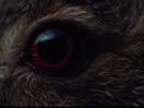 Andrea Marini Directs Striking 'Visual Ode to the Hare in the Woods' for Massimo Bottura