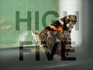 High Five UK: September 2019