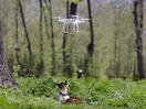 Are Drones a Smart Way to Keep Tabs on Your Pet? Probably Not...