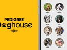 BBDO New York Puts Dogs in Clubhouse Chatrooms in Adoption Campaign for Pedigree