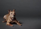 The Lost Dogs' Home Explores the Difference Love Makes in New Campaign