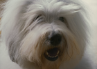 Camila Zapiola Teaches the Dulux Paint Dog New Tricks in Slick Spot