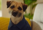 Meet Mulligan, The First New Feisty (and Furry) Face of AA Ireland