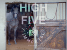 Immortal High Five: Carol Lambert