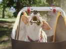 Coffee & TV Creates 'Charlie The Singing Dog' for Go Outdoors