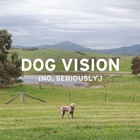 Visit Victoria Harnesses 'Doggie Vision' for The World's First Optimised Canine Campaign