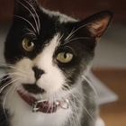 KFC and Ogilvy Sydney Tell a Tale of Two Mates and a Creepy Cat