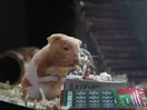 Claude the Hamster Hopes for a Lucky Scratch in Holiday Love Story for Illinois Lottery