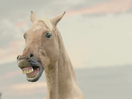 These Horses Can't Stop Singing Because of All the New Millionaires in Sweden