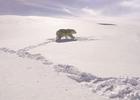 ENGLAND 'TIL I DYE: SNK Creates Fake Pawdio Mix for Paddy Power Polar Bear Stunt