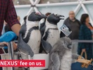 CIBC Introduces Percy the Penguin to Promote Aventura Benefits