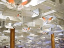 Luck Takes Flight at Changi Airport
