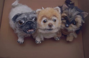 This Animated Musical Highlights the Dark Side of the Pet Trade