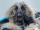 RSPCA Pet Insurance's New Spot Celebrates 'That RSPCA Feeling'