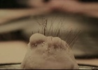 This Mole is the New Star of Brazilian Advertising. No, Really.