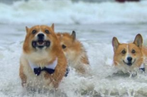 Corgis & Knights Storm the English Channel for Mars' Euro 2016 Campaign