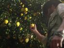 Mike's Hard Lemonade Hunts for the Ultimate Lemons in Latest Spots