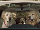 The Barkleys Are Back: Subaru Unveils All-New 'Dog Tested. Dog Approved' TV Ads