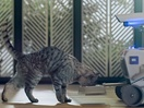 Goldstein Creates Meowsic for New Whiskas Kat Institute of Technology Campaign