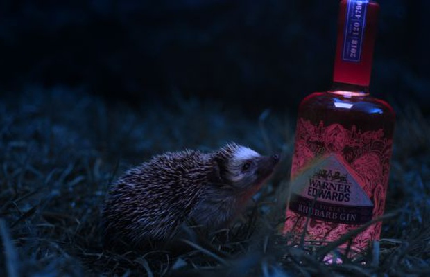 Hedgehog Wanders Through a Field of Gin in Pablo's First Warner Edwards Work