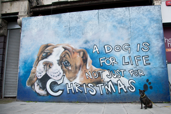 Dogs Trusts Takes Slogan to UK Streets
