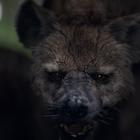 Terrifying Hyenas Represent School Bullies in FCB Inferno's Barnardo's Ad