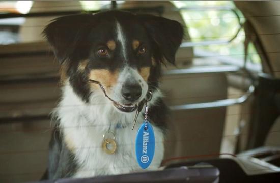 Sawyer the Dog Stars For Allianz