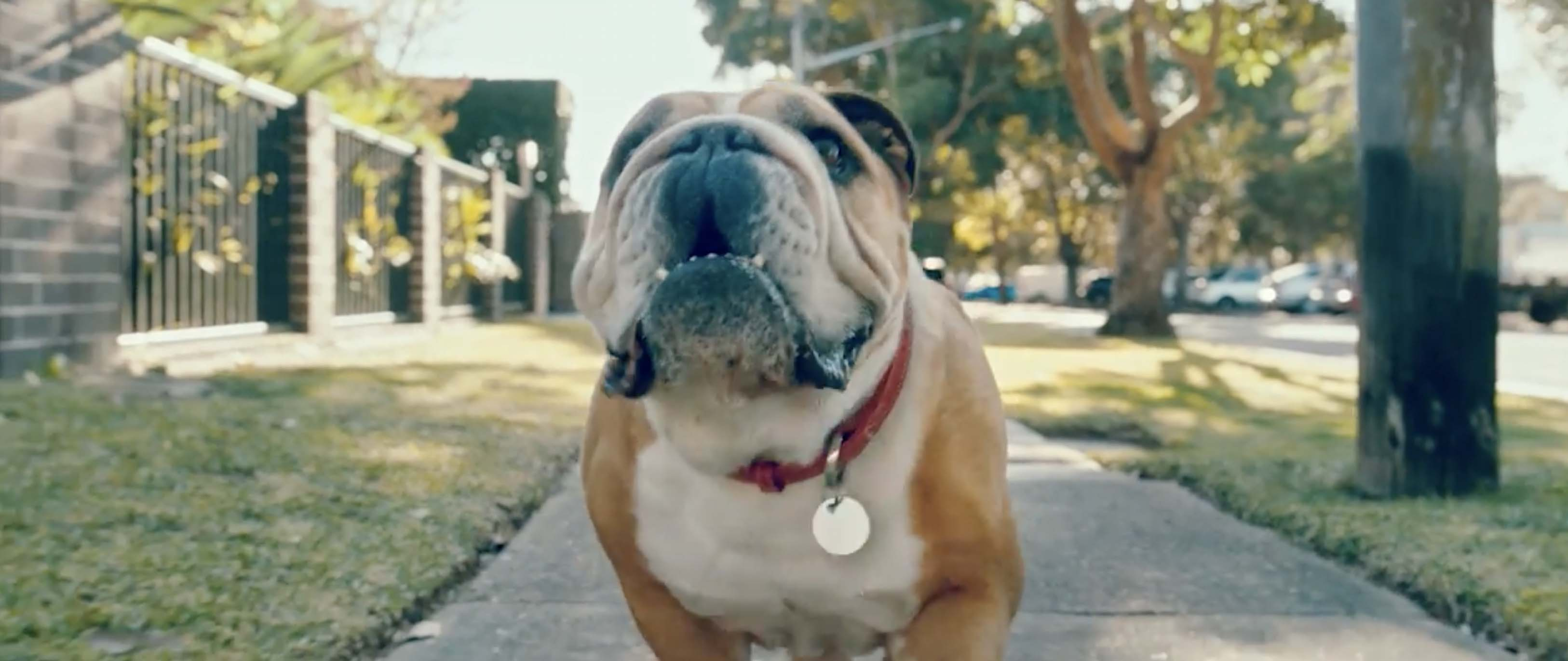 Boss Bulldog is the Master of Her Castle in Clipsal Ad