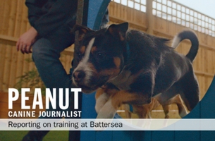 Battersea Launches First Major Brand Campaign Introduces Peanut The Dog and Misty The Cat