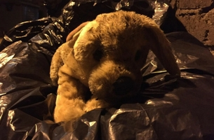 RSPCA's Christmas Toy Puppy Tale May Be The Most Touching Thing You'll See Today