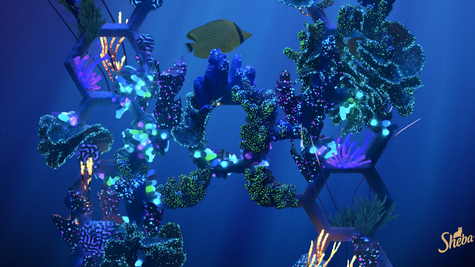 weareseventeen Crafts Visual Identity for SHEBA's Coral Reef Restoration Project 'Hope Grows'